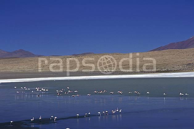 ec1220-32LE : Flamants rose, Sud Lipez.  Amérique du sud, Amérique Latine, Amérique, ciel bleu, oiseau, C02, C01 faune, groupe, lac, paysage, voyage aventure (Bolivie).