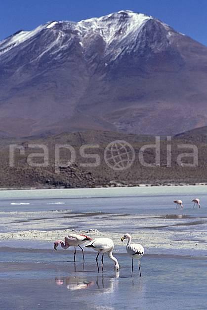 ec1221-08LE : Flamants rose, Sud Lipez.  Amérique du sud, Amérique Latine, Amérique, ciel bleu, oiseau, C02, C01 faune, groupe, lac, paysage, voyage aventure (Bolivie).
