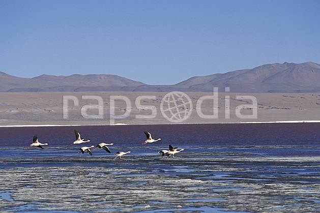 ec1223-24LE : Flamants rose, Sud Lipez.  Amérique du sud, Amérique Latine, Amérique, ciel bleu, oiseau, C02, C01 faune, groupe, lac, paysage, voyage aventure (Bolivie).