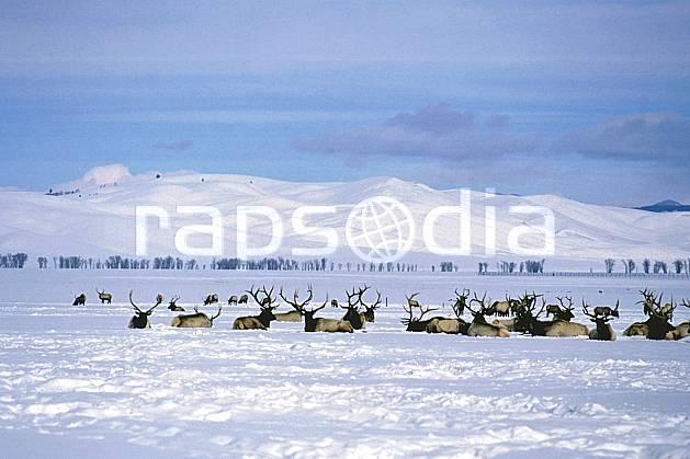 ec1989-17LE : Elks Refuge, Wyoming.  Amérique du nord, ciel nuageux, C02, C01 faune, groupe, paysage, voyage aventure (Usa).