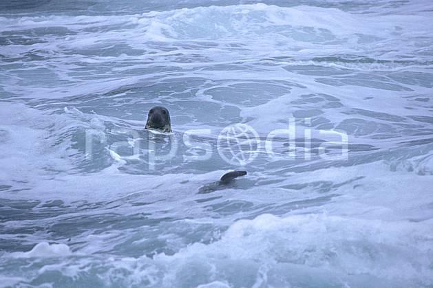 ec2066-18LE : Phoque, Ecosse.  Europe, CEE, phoque, vague, écosse, C02, C01 faune, mer, voyage aventure (Royaume-Uni).