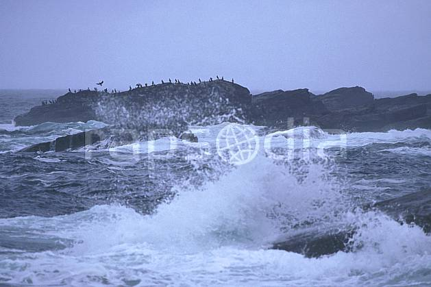 ec2066-26LE : Cormorans, Ecosse.  Europe, CEE, littoral, ciel voilé, oiseau, vague, écosse, C02, C01 faune, mer, paysage, voyage aventure (Royaume-Uni).