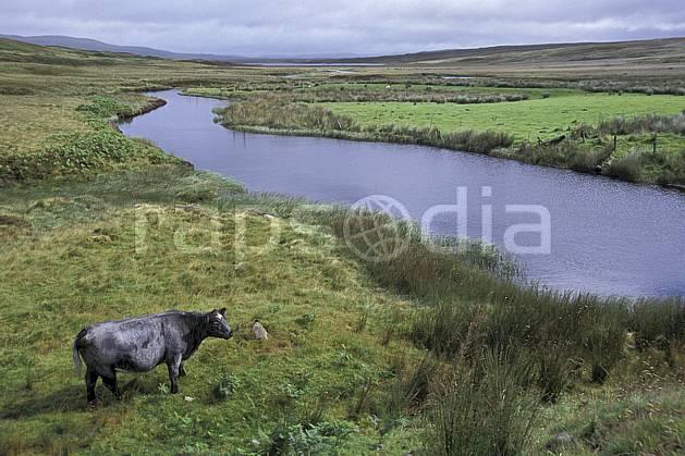 ec2067-04LE : Vache écossaise, Ecosse.  Europe, CEE, ciel voilé, herbe, vache, écosse, C02, C01 faune, paysage, rivière, voyage aventure (Royaume-Uni).