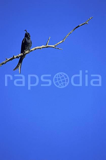 ec2278-07LE : Oiseau.  Afrique, Afrique de l'est, ciel bleu, oiseau, C02, C01 faune, voyage aventure (Madagascar).