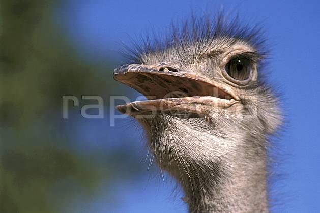 ec2279-04LE : Autruche.  Afrique, Afrique de l'est, ciel bleu, oiseau, C02, C01 faune, voyage aventure (Madagascar).