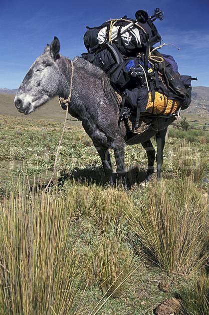 ec2703-17LE : Trek équestre entre Olléros et Chavin.  Amérique du sud, Amérique Latine, ciel bleu, âne, C02, C01 faune, voyage aventure (Pérou).