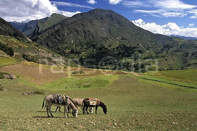 ec2714-29LE : Ane péruvien, Au dessus de Huantar.  Amérique du sud, Amérique Latine, ciel nuageux, âne, C02, C01 faune, groupe, paysage, voyage aventure (Pérou).