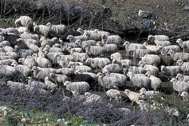 ec2724-14LE : Quebrada Quilcayhuanca.  Amérique du sud, Amérique Latine, mouton, C02, C01 faune, groupe, voyage aventure (Pérou).