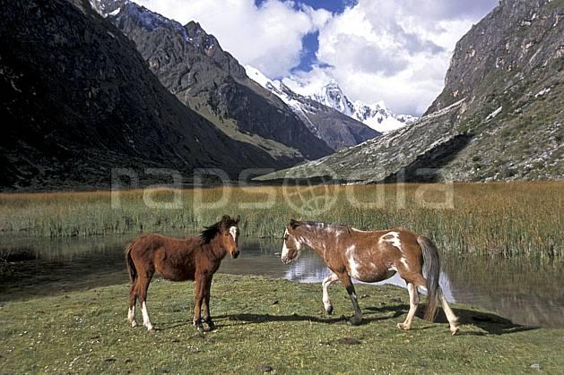 ec2726-08LE : Chevaux sauvages, Quebrada Santa Cruz.  Amérique du sud, Amérique Latine, cheval, ciel nuageux, C02, C01 faune, groupe, lac, paysage, voyage aventure (Pérou).