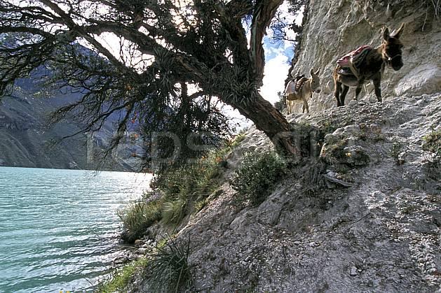 ec2726-17LE : Ane péruvien, Quebrada Santa Cruz.  Amérique du sud, Amérique Latine, âne, C02, C01 arbre, faune, groupe, lac, voyage aventure (Pérou).