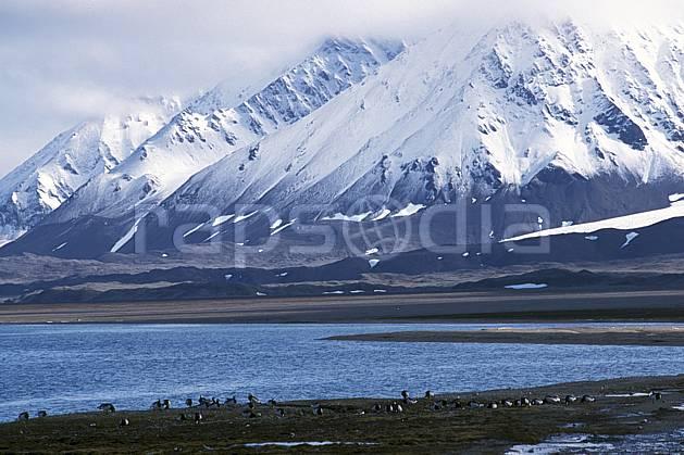 ec2762-12LE : Pingouins, Svalbard, Ile du Spitzberg, Ny-Ålesund.  Europe, CEE, ciel nuageux, pingouin, C02, C01 faune, paysage, voyage aventure, mer (Norvège).