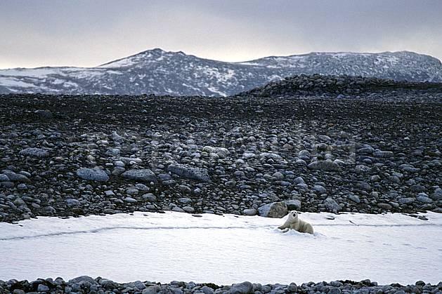 ec2769-20LE : Ours polaire, Svalbard, Ile de PhippsØya (N).  Europe, CEE, ciel nuageux, ours, C02, C01 faune, paysage, voyage aventure (Norvège).
