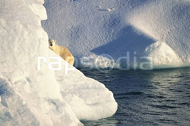 ec2772-01LE : Ours polaire sur un iceberg, Svalbard, Ile de Nordaustlandet côte sud.  Europe, CEE, iceberg, ours, C02, C01 faune, voyage aventure, mer (Norvège).