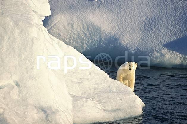 ec2772-04LE : Ours polaire sur un iceberg, Svalbard, Ile de Nordaustlandet côte sud.  Europe, CEE, iceberg, ours, C02, C01 faune, voyage aventure, mer (Norvège).