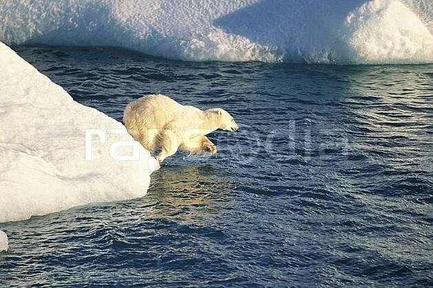 ec2772-07LE : Ours polaire, Svalbard, Ile de Nordaustlandet côte sud.  Europe, CEE, iceberg, ours, C02, C01 faune, voyage aventure, mer (Norvège).