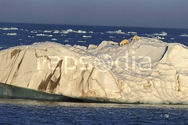 ec2773-13LE : Ours polaire femelle et son petit, Svalbard, Ile de Nordaustlandet côte sud.  Europe, CEE, ciel voilé, iceberg, ours, C02, C01 faune, paysage, voyage aventure, mer (Norvège).
