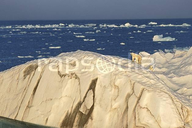 ec2773-15LE : Ours polaire femelle et son petit, Svalbard, Ile de Nordaustlandet côte sud.  Europe, CEE, ciel voilé, iceberg, ours, C02, C01 faune, paysage, voyage aventure, mer (Norvège).