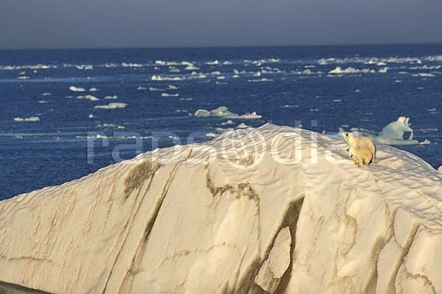 ec2773-23LE : Ours polaire femelle et son petit, Svalbard, Ile de Nordaustlandet côte sud.  Europe, CEE, ciel voilé, iceberg, ours, C02, C01 faune, paysage, voyage aventure, mer (Norvège).