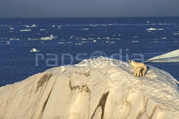 ec2773-27LE : Ours polaire femelle et son petit, Svalbard, Ile de Nordaustlandet côte sud.  Europe, CEE, ciel voilé, iceberg, ours, C02, C01 faune, paysage, voyage aventure, mer (Norvège).