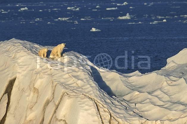 ec2773-32LE : Ours polaire femelle et son petit, Svalbard, Ile de Nordaustlandet côte sud.  Europe, CEE, iceberg, ours, C02, C01 faune, paysage, voyage aventure, mer (Norvège).