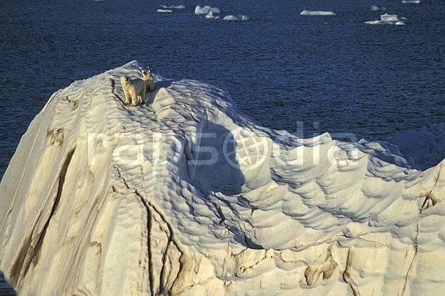 ec2774-02LE : Ours polaire femelle et son petit, Svalbard, Ile de Nordaustlandet côte sud.  Europe, CEE, iceberg, ours, C02, C01 faune, voyage aventure, mer (Norvège).