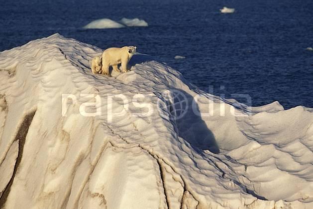 ec2775-18LE : Ours polaire femelle et son petit, Svalbard, Ile de Nordaustlandet côte sud.  Europe, CEE, iceberg, ours, C02, C01 faune, voyage aventure, mer (Norvège).