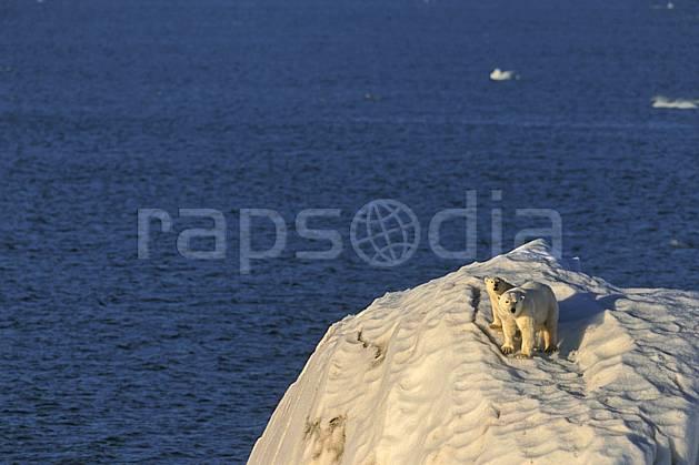 ec2775-22LE : Ours polaire femelle et son petit, Svalbard, Ile de Nordaustlandet côte sud.  Europe, CEE, iceberg, ours, C02, C01 faune, voyage aventure, mer (Norvège).