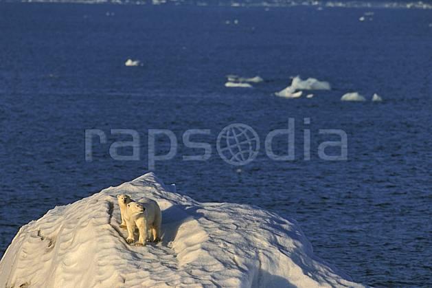 ec2775-24LE : Ours polaire femelle et son petit, Svalbard, Ile de Nordaustlandet côte sud.  Europe, CEE, iceberg, ours, C02, C01 faune, voyage aventure, mer (Norvège).
