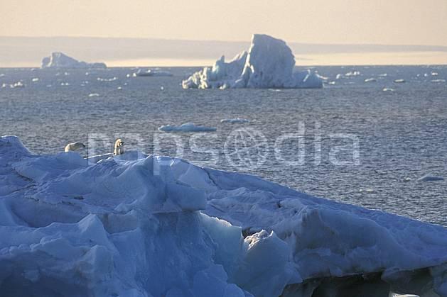 ec2776-04LE : Ours polaire femelle et son petit, Svalbard, Ile de Nordaustlandet côte sud.  Europe, CEE, ciel voilé, iceberg, ours, C02, C01 faune, paysage, voyage aventure, mer (Norvège).