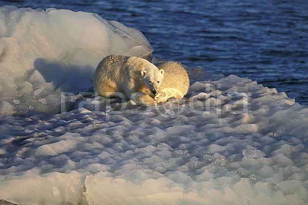 ec2776-08LE : Ours polaires, Svalbard, Ile de Nordaustlandet côte sud.  Europe, CEE, iceberg, ours, C02, C01 faune, voyage aventure, mer (Norvège).