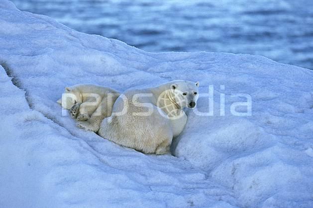 ec2777-29LE : Ours polaire femelle et son petit, Svalbard, Ile de Nordaustlandet côte sud.  Europe, CEE, iceberg, ours, C02, C01 faune, voyage aventure, mer, gros plan (Norvège).