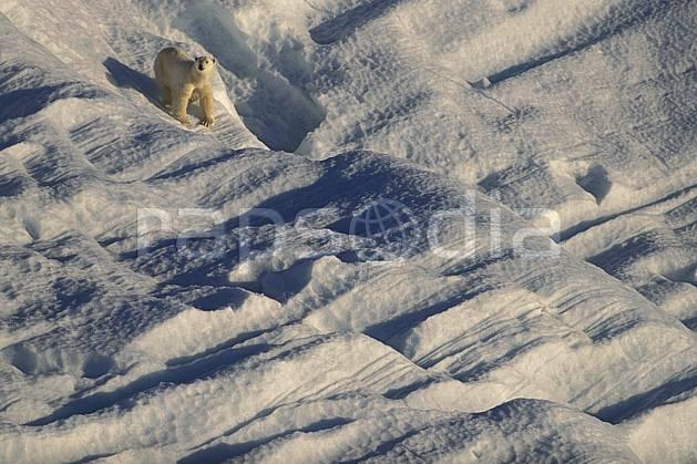 ec2778-28LE : Ours polaire, Svalbard, Ile de Nordaustlandet côte sud.  Europe, CEE, iceberg, ours, C02, C01 faune, voyage aventure (Norvège).