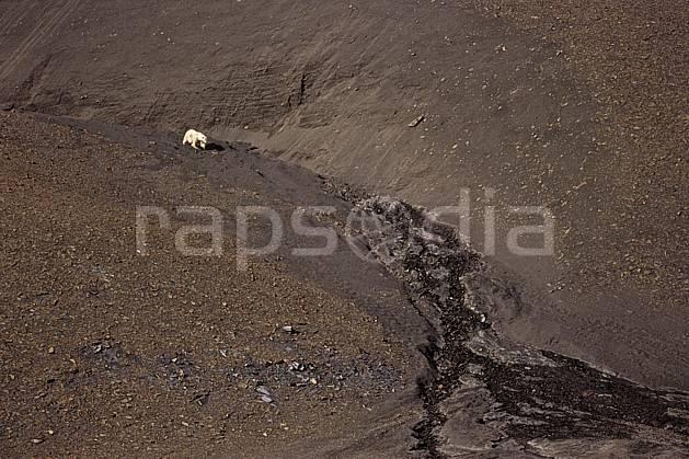 ec2781-24LE : Ours polaire à Discobukta, Svalbard, Ile de EdgeØya (E).  Europe, CEE, ours, C02, C01 faune, voyage aventure (Norvège).