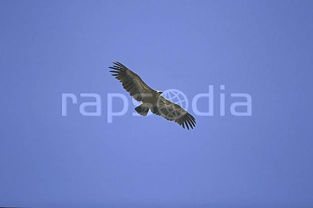 ec2828-17LE : Aigle.  Afrique, Moyen Orient, ciel voilé, oiseau, voler, C02, C01 faune, voyage aventure (Arabie-Saoudite).