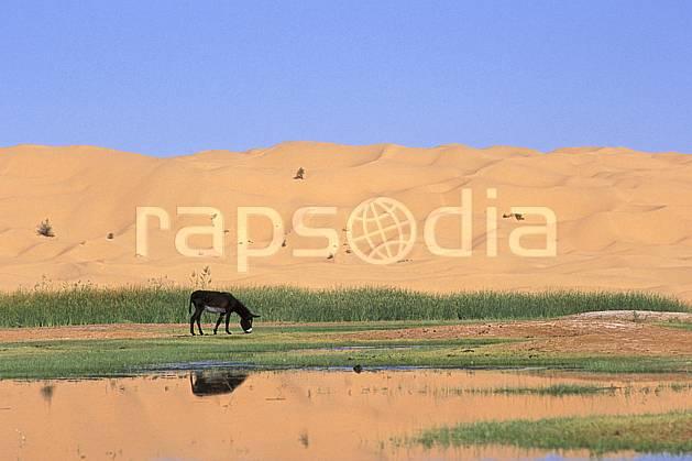 ec3068-15LE : Oasis, Ane.  Afrique, Afrique du nord, dune, oasis, âne, C02, C01 désert, faune, voyage aventure (Tunisie).