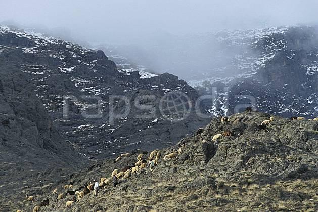 ec3150-24LE : Trek Maroc.  Afrique, Afrique du nord, mouton, C02, C01 faune, moyenne montagne, paysage, voyage aventure (Maroc).