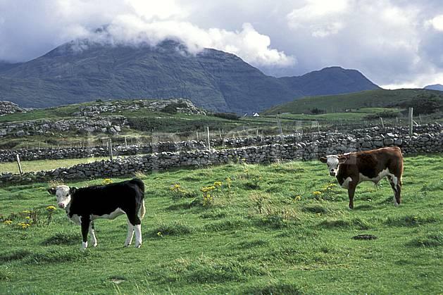 ec3174-13LE : Paysage d'Irlande.  Europe, CEE, champ, campagne, C02, C01 faune, moyenne montagne, nuage, voyage aventure (Irlande).