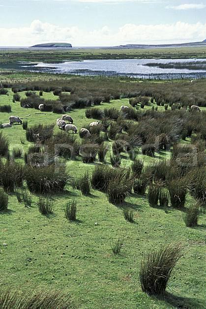 ec3175-37LE : Paysage d'Irlande.  Europe, CEE, mouton, C02, C01 faune, voyage aventure (Irlande).