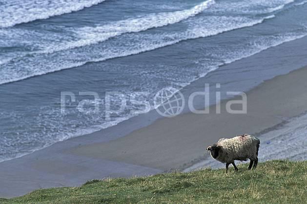 ec3179-10LE : Paysage d'Irlande, Achill Island.  Europe, CEE, mouton, plage, C02, C01 faune, mer, voyage aventure (Irlande).