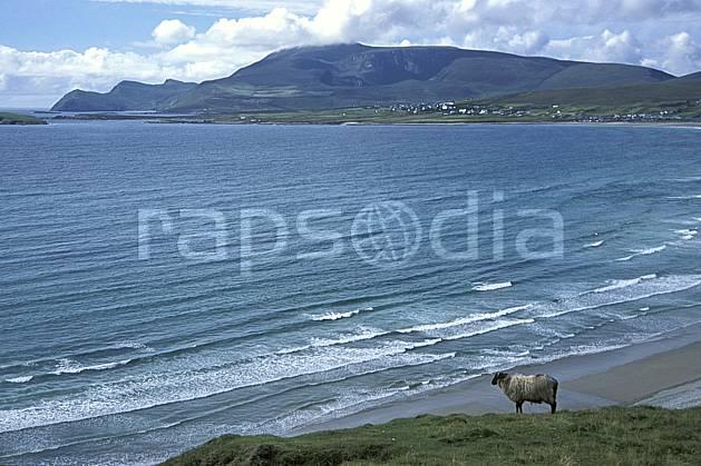 ec3179-11LE : Paysage d'Irlande, Achill Island.  Europe, CEE, mouton, plage, C02, C01 faune, mer, voyage aventure (Irlande).