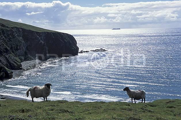 ec3179-15LE : Paysage d'Irlande, Achill Island.  Europe, CEE, mouton, C02, C01 faune, mer, voyage aventure (Irlande).