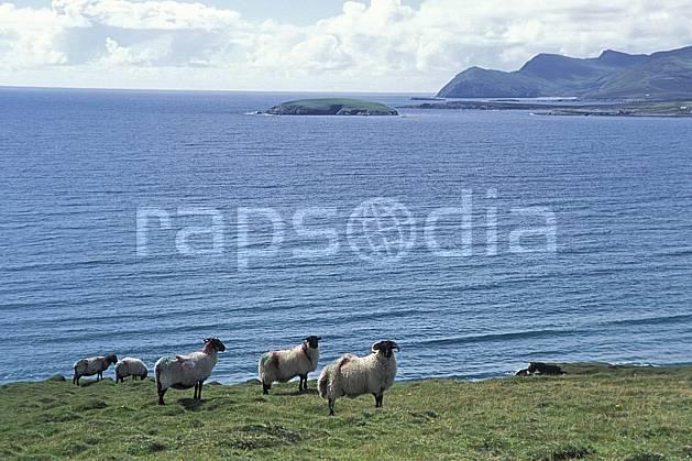 ec3179-16LE : Paysage d'Irlande, Achill Island.  Europe, CEE, mouton, C02, C01 faune, mer, voyage aventure (Irlande).