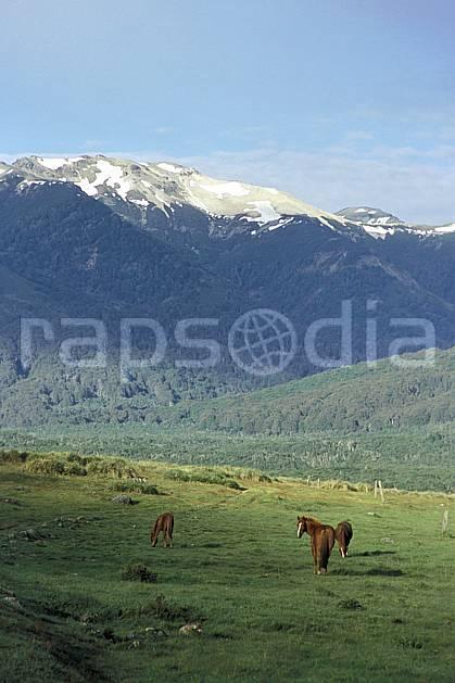ec3181-18LE : Patagonie.  Amérique du sud, Amérique Latine, Amérique, cheval, C02, C01 faune, moyenne montagne, paysage, voyage aventure (Argentine).