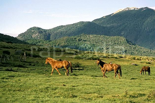 ec3181-19LE : Patagonie.  Amérique du sud, Amérique Latine, Amérique, cheval, C02, C01 faune, moyenne montagne, paysage, voyage aventure (Argentine).