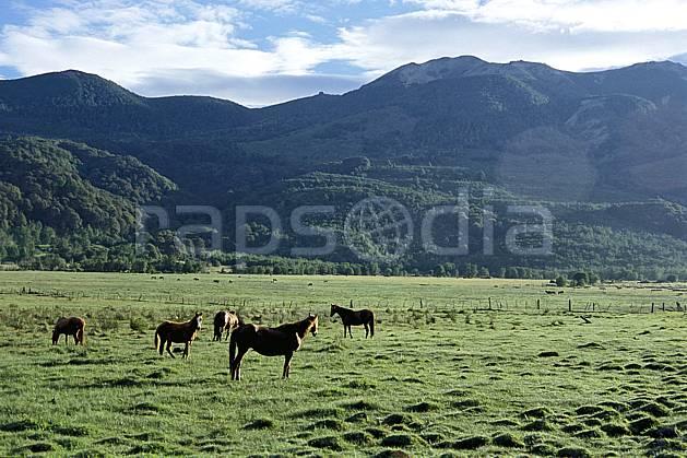 ec3181-20LE : Patagonie.  Amérique du sud, Amérique Latine, Amérique, cheval, champ, C02, C01 faune, forêt, moyenne montagne, paysage, voyage aventure (Argentine).