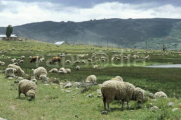 ec3187-13LE : Patagonie.  Amérique du sud, Amérique Latine, Amérique, mouton, champ, C02, C01 environnement, faune, habitation, moyenne montagne, paysage, voyage aventure (Argentine).
