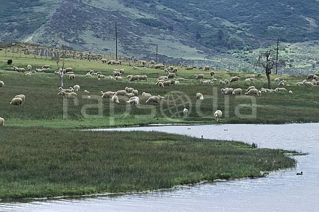 ec3187-18LE : Patagonie.  Amérique du sud, Amérique Latine, Amérique, mouton, C02, C01 faune, lac, moyenne montagne, paysage, voyage aventure (Argentine).