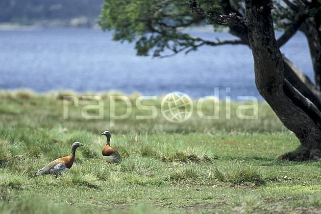 ec3188-03LE : Patagonie.  Amérique du sud, Amérique Latine, Amérique, oiseau, C02, C01 arbre, faune, lac, voyage aventure (Argentine).