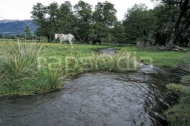 ec3188-14LE : Patagonie.  Amérique du sud, Amérique Latine, Amérique, cheval, C02, C01 faune, moyenne montagne, paysage, rivière, voyage aventure (Argentine).