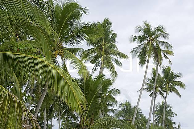 ed083117LE libre de droits , 19072010, Asie, Asie du sud est, cocotier, palmier, arbre, flore, forêt, voyage aventure (Philippines).